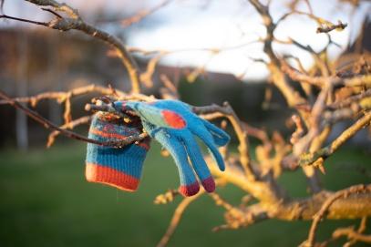 glove-in-tree-1