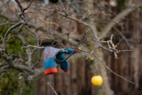 glove-in-tree-4