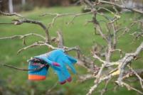 glove-in-tree-5