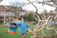 glove-in-tree-6