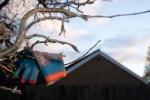 glove-in-tree-7