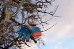 glove-in-tree-8