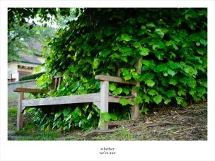 19-overgrown-bench